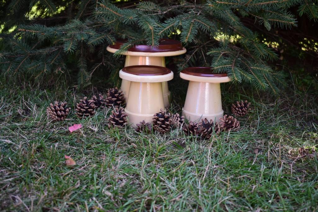 Jesienne grzyby z doniczek