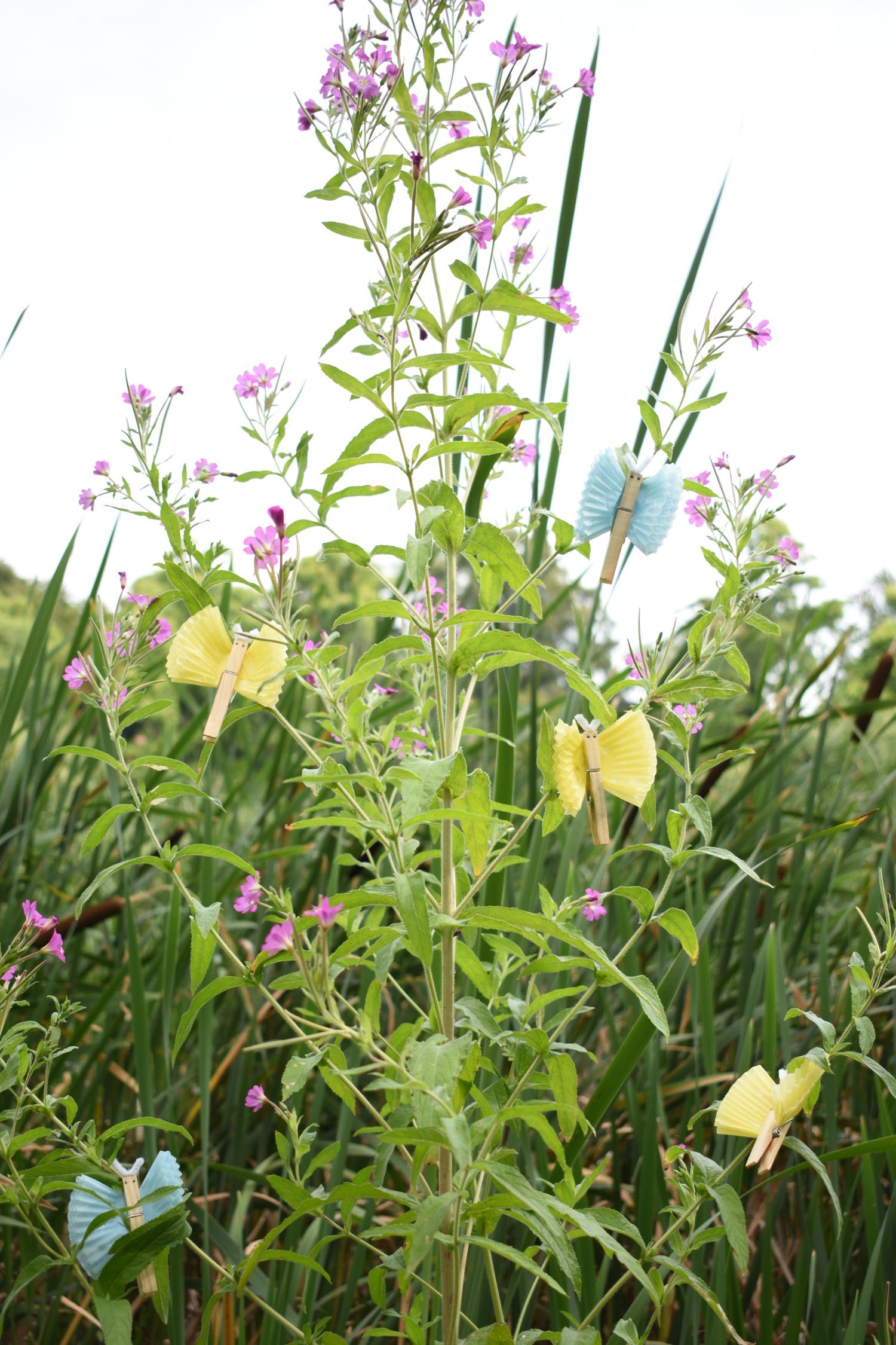 motylkowy-ogród